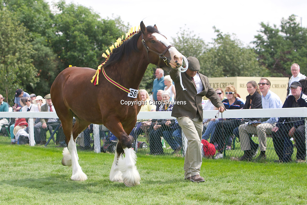 Mr R J Bloom's bay gelding  Felthorpe Clarry<br /> 4 years old<br /> Sire  Ruskington Hartley<br /> Winner  Gelding 4 years and over class