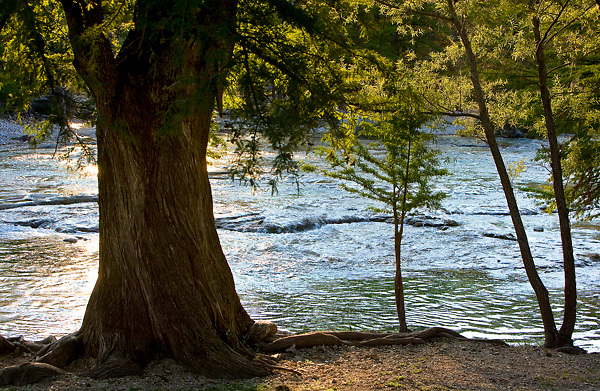 Trees along the banks of the Frio River in the Texas Hill Country