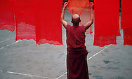 DHARAMSALA, INDIA -  A monk hangs freshley dyed ceremonial cloth at the Namgyal Monastery, inside the Dalai Lama's compound in Dharamsala, India. The focus of cultural life in Dharamsala is the Namgyal Monastery, the tantric college which performs rituals with and for His Holiness the Dalai Lama. The Namgyal Monastery was founded by the Third Dalai Lama in the late sixteenth century. Since then, the monastery has exclusively served the Dalai Lamas. A distinctive feature of this monastery is its diversity of practice: prayers and rituals of all the major schools of Tibetan Buddhism are performed by Namgyal monks. The monastery is now situated next to the Tsuglag Khang, or the Central Cathedral, across from the Dalai Lama's residence. Young monks can often be seen studying, and practicing debate in the courtyard leading to His Holiness' residence. At present, the monastery has more than 180 monks, of which the younger monks study the major texts of Buddhist Sutra and Tantra. (Photo © Jock Fistick)