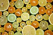 Lemon, Kafir Lime, Limequat  Nagami Kumquat,  Calamundi Kumquat, Kumquat