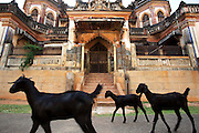 Goats walk past the elaborate entrance to a mansion in Kanadukathan. Numbering more than 25,000, Chettinad's mansions were built by a Hindu caste of Chettiars called the Nagarathars. They were bankers and merchants who made their fortunes outside India in Burma, Malaysia, Vietnam and Singapore during the times of the British colonialism. With this new found fortunes they built mansions, exquisite palaces that rivaled those of even the Maharajah's using teak from Burma, marble form Italy, tiles from Japan and steel from England. But these glory days only lasted until after the WWII when the British left Burma and they were forced to leave return to India. Suddenly with no income their mansions began to decay and fall down or were pulled take and the pillars, windows, doors and antiques were sold. Some estimates say that around 20 per month are coming down. Hopefully, with the aid of preservation projects such as the Revive Chettinad Society, and the influx of tourism these mansions can be saved before they all fall down.