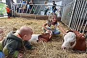 Nederland, Hernen, 29-6-2014Streekgala bij het De Scheerskamp. De kalfjes waren bij kinderen in trek.Tijdens het streekgala konden kinderen kalfjes knuffelen. Foto: Flip Franssen/Hollandse Hoogte