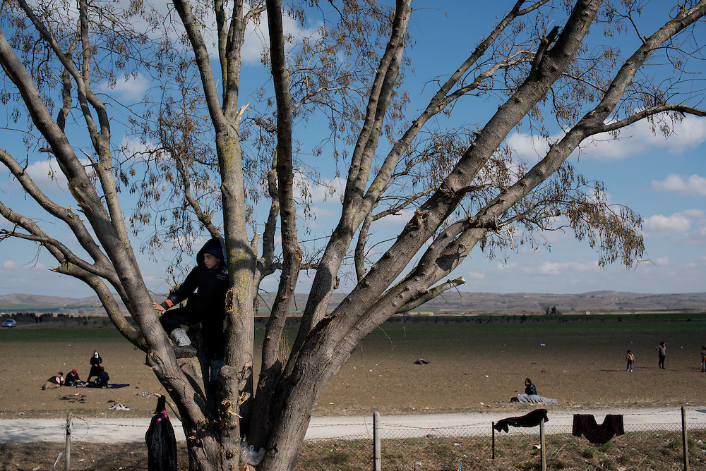 A Syrian kid climbs a tree behind the petrol station 20 km from Idomeni. In the last few months the fields near this petrol station have become a transit camp for thousands of refugees and migrants waiting to cross to Greek Macedonian border.