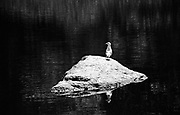 Bird on a rock looking left.