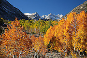 Fall Colors and Snow Capped Mountains