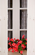 An old window with wooden shutters and a windowbox of begonias in the village of Campagne, Dordogne, France