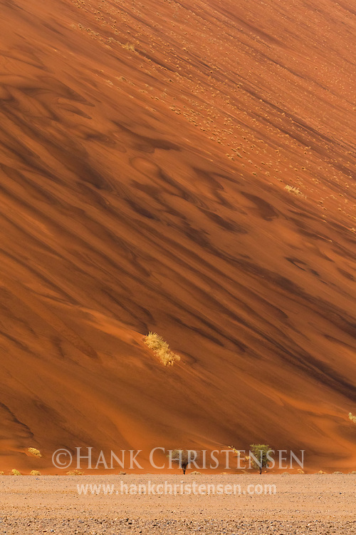 A rare rainfall turns the giant dunes of the Namib Desert wet, forming patterns across the dune's massive face, Namib-Naukluft National Park, Namibia.