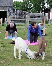 180615 - Goat Yoga