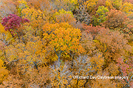 63876-02306 Aerial view of fall color trees Stephen A. Forbes State Park Marion Co. IL