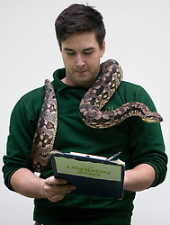©London News Picures. A Zoo keeper holds aDumerils boa snake before making a record of their numbers at London Zoo as part of the zoo's annual stocktake on January 4, 2011 in London, England. ZSL London Zoo is home to over 650 different species which all need to be cataloged in their annual stocktake which is a compulsory requirement for their zoo license.Photo credit should read Fuat Akyuz/London News Pictures.