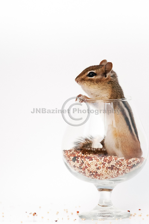 Chipmunk standing in a snifter of seed