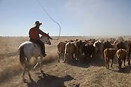 Australian Cattle Property  Brunette Downs