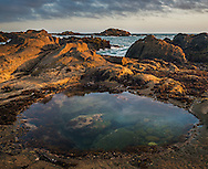 Tidepool at Bean Hollow State Beach, San Mateo County coast, California
