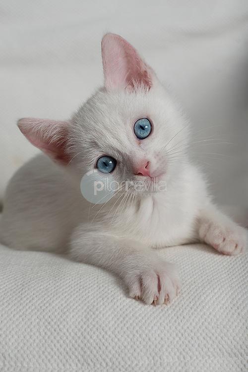 Gatito blanco © / PILAR REVILLA