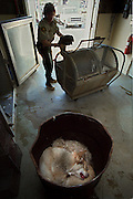 A day in the life with a Sacramento County Animal Control Officer. A horrifying scene as a dog gets put into a chamber were is life will end. As another dog lays in the trash can after the euthanasia.