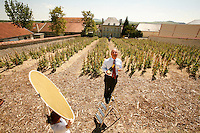 """Director Ghislain de Monglofier, in the """"Chaude Terre"""" Vineyard,  Bollinger Champagne, Ay, France....The grapes from this vineyard is used for the exclusive Bollinger Vieilles Vignes Francaises....photograph by Owen Franken for the NY Times....assignment number 30024675A....June 6, 2006.. ........................................ - Photograph by Owen Franken"""
