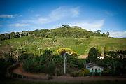 Manhuacu_MG, Brasil.<br /> <br /> Plantacao de cafe em Manhuacu, Minas Gerais.<br /> <br /> Coffee tree in Manhuacu, Minas Gerais.<br /> <br /> Foto: ALEXANDRE MOTA / NITRO