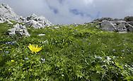 Landscaote Zla Kolata / Maja e Keq 2535m, peak, Albania and Montenegro border.