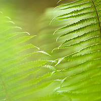 TNC Big Island Honomalino Preserve