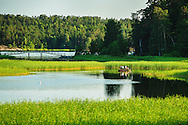 Fyra män fiskar från en båt i vik med vass Gålö i Stockholms skärgård.