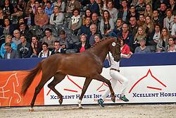454, Kenzo<br /> KWPN Stallionshow - 's Hertogenbosch 2018<br /> © Hippo Foto - Dirk Caremans<br /> 03/02/2018