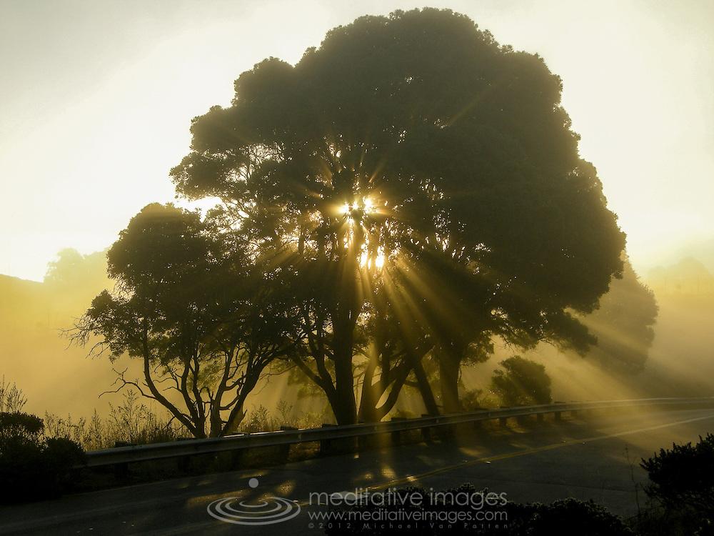Rays of sunlight streaming through tree of life.