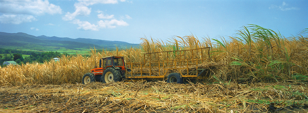 A tractor collecting sugar cane from a plantation. Once the lifeblood of many of the Caribbean islands, sugar and rum production have eventually been overtaken by tourism