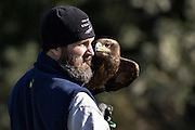 Education Director Stephen Schabel holds a Steppe Eagle during a demonstration at the Center for Birds of Prey November 15, 2015 in Awendaw, SC.