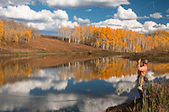 A fly fisherman reels in a trout at an alpine lake in Colorado. Aspen trees with fall colors and clouds are reflected in the lake.