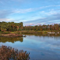 South Florida landscape photography from New England based outdoor photographer Juergen Roth showing the waterscape of Green Cay Nature Center and Wetlands with a flocking of birds in Boynton Beach, Florida. Green Cay and Wakodahatchee Wetlands are amazing nature area for viewing and photographing wildlife in Florida. <br />