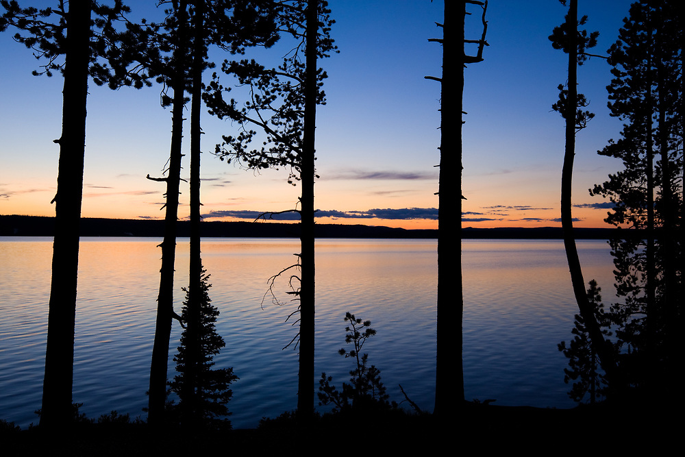 Pine silhouetted against the sunset over Lewis Lake in Yellowstone National Park, Wyoming.