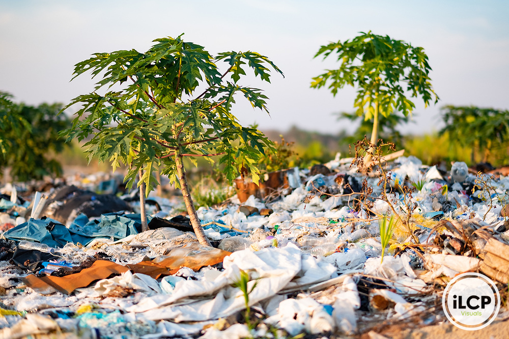 Trash piles act as mulch, holding water and protecting plants such as papaya, camote, peppers, and watermelon that grow from seeds discarded in food waste. Following Peru's February 2019 militarized crackdown on illegal and unofficial alluvial gold mining in the La Pampa region of Madre de Dios, Wake Forest University's Puerto Maldonado-based Centro de Innovación Científica Amazonia (CINCIA), a leading research institution for the development of technological innovation for biological conservation and environmental restoration in the Peruvian Amazon, is applying years of scientific research and technical experience related to understanding mercury contamination and managing Amazonian ecosystems. What they learn will help guide urgent remediation, restoration, and reforestation efforts that can also serve as models for how we address the tropic's most dramatically devastated landscapes around the world. La Pampa, Madre de Dios, Peru.