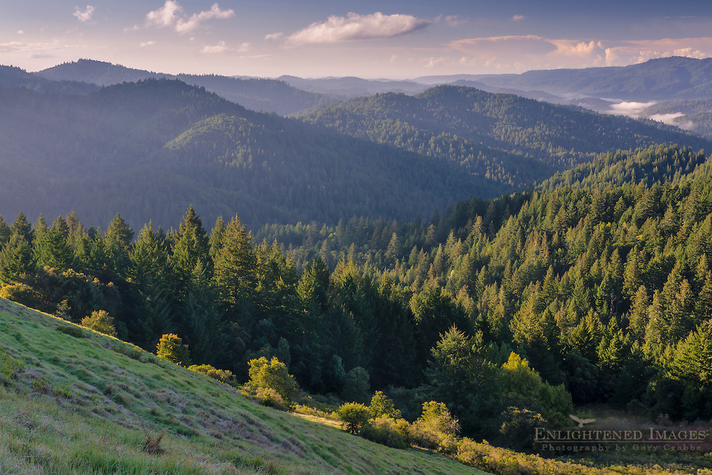 Trees and forest, Castle Rock State Park, Santa Cruz Mountains, Santa Cruz County, California