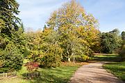 Autumn landscape view National arboretum, Westonbirt arboretum, Gloucestershire, England, UK