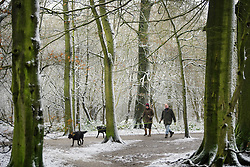 © Licensed to London News Pictures. 12/02/2017. Princess Risborough, UK. A couple walk their dogs through snow covered woodland in Princess Risborough, Buckinghamshire, south east England, as large parts of the UK wake to freezing temperatures and snowfall over night. Photo credit: Ben Cawthra/LNP