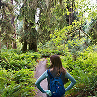 Exploring the Hoh Rainforest in Olympic National Park, Washington, USA