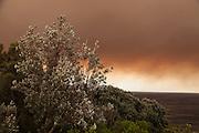 A blanket of smoke descends on Christison Park, Watsons Bay, Sydney, Australia.