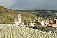 Italie, Fumane, 20080403<br /> Wijnhuis Allegrini in de Valpolicella regio.<br /> wijnakker Palazzo della Torre. Gelegen in de uitlopers van Fumane, wordt deze wijngaard vernoemd naar de aangrenzende Villa della Torre, een belangrijke erfenis van de Italiaanse Renaissance, die ook deel uitmaakt van de Allegrini Estate.<br /> de familie Allegrini heeft een leidende rol gespeeld in de geschiedenis van Fumane en Valpolicella sinds de 16e eeuw en is geslaagd op de cultuur van wijnbereiding van generatie op generatie.<br /> <br /> <br /> <br /> Italy, Fumane 20080403<br /> Allegrini winery in the Valpolicella region.<br /> Wine field Palazzo della Torre.<br /> the Allegrini family has played a leading role in the history of fumane and of Valpolicella since the 16th century and has passed on the culture of wine-making from generation to generation.<br /> Situated in the foothills of Fumane, this vineyard is named after the adjacent Villa della Torre, an important legacy of the Italian Renaissance which is also part of the Allegrini Estate.