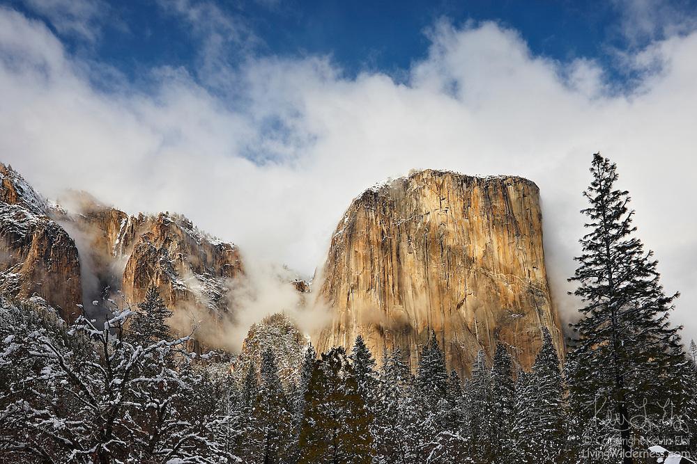 A snow storm passes over El Capitan in Yosemite National Park, California. El Capitan rises 3,000 feet (910 meters) from the Yosemite Valley floor.
