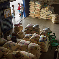 March, 21, 2014 - Coffee processed and stored for world-wide shipment at a co-op, Coopertiva de Caficultores de Andes in the town of Jardin in the Department Antioquia region of Colombia.<br /> Story Summary:<br /> Deep in the verdant valleys of Colombia&rsquo;s Department Antioquia region is Fabio Alonso Reyes Cano&rsquo;s coffee finca. Finca La Siemeona has been in Cano&rsquo;s family for generations. <br /> He and two workers farm the 5-acres of land as his ancestors did, bean by bean.  It is a tradition that has dwindled amid modern day farming techniques that harvest quicker but the selectively picked ripe deep red cherries are picked individually by hand for the best quality. &lsquo;Grain by grain&rsquo; processing allows for greater control over that quality of one of Colombia&rsquo;s top exports.  It also may help save an industry that is seeing firsthand the effects of climate change.<br /> Cano takes pride in the organic process, which he practices out of respect for nature and the land he was born and raised on.  A businessman, Cano keeps his eyes on way to grow but he also takes seriously his role as steward, encouraging biodiversity and employing natural pest control on the finca.  His practices are at odds with other coffee farmers, who have adopted more industrialized techniques. <br /> Climate change threatens a way of life that supports about 92,000 families nationwide and serves as one of Colombia&rsquo;s economic backbones.  Colombian coffee production has declined in recent years due to regional climate change associated with global warming as both the average temperatures have risen and an increase in rainfall.  The trend disrupts the specific climate requirements to grow the Coffea Arabica bean, and a way of life.  (Credit Image: &copy; Eric Reed/ZUMAPRESS.com)