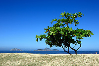 beautiful tree on ipanema beach in rio de janeiro brazil