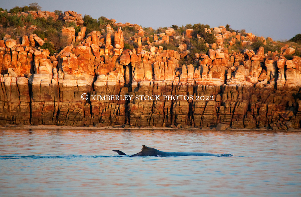 A humpback whale cow and calf swim peacefully near Bumpus Island in Camden Sound