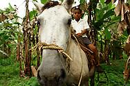 El distrito de Chiriquí Grande es una de las divisiones que conforma la provincia de Bocas del Toro, situado en la República de Panamá.<br /> <br /> El distrito de Chiriquí Grande fue creado a través del Decreto Ley No. 18 de Diciembre de 1903 cuando Panamá se separaba de Colombia. Dicho decreto Ley fue proclamado por la Junta Provicional de Gobierno de la época.<br /> <br /> La población es predominantemente nativa: la presencia de ngobes (pueblos originarios) es constante y mayoritaria, aunque también existen pequeños núcleos de buglés, afroantillanos, mestizos, latinos y de campesinos provenientes de la vecina provincia de Chiriquí.<br /> <br /> Su relieve posee grandes elevaciones como cerro robalo entre otros, sus tierras bajas son utilizadas para áreas de cultivos y la ganadería. Sus ríos son cortos y caudalosos como: el río Róbalo, Guarumo, Pez Bobo,etc<br /> <br /> Su clima es relativamente es tropical húmedo llueve casi en todo el año y se da con gran intensidad en las tierras altas.<br /> <br /> <br /> ©Alejandro Balaguer/Fundación Albatros Media.