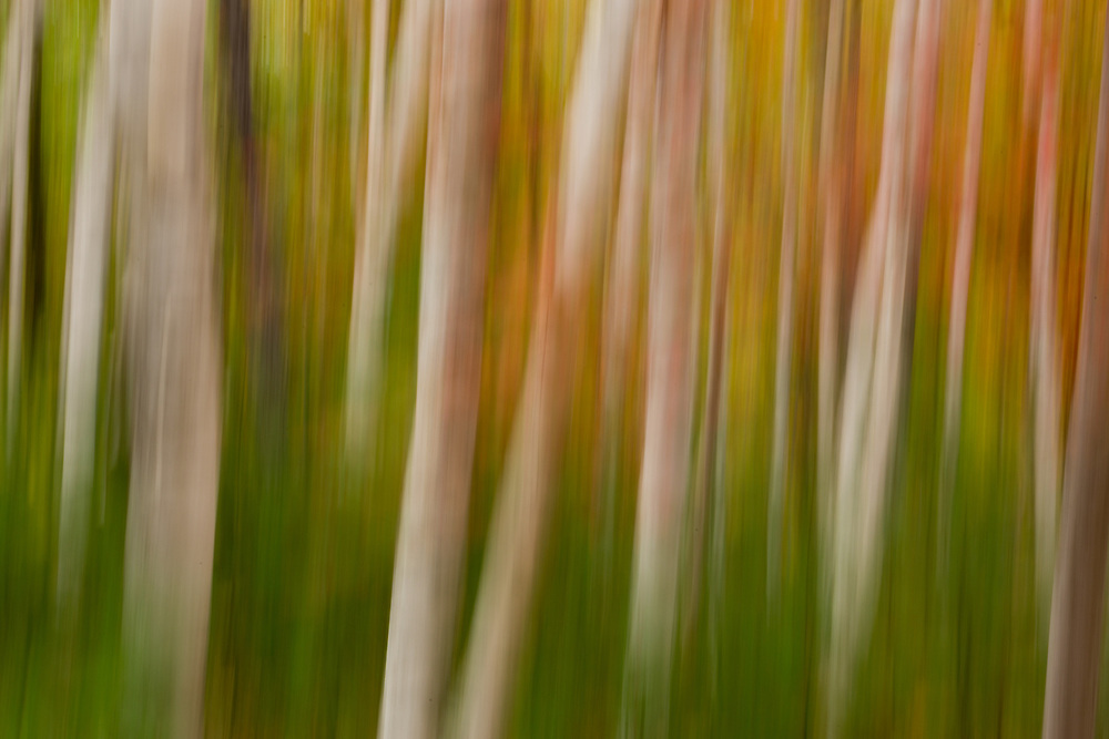 With a shutter speed of a half second the camer was moved up and down during the exposure to create a more painterly, abstract autumn image.  Acadia NP, Maine