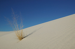 A dry bush grows amidst  the dunes at White Sands National Monument, New Mexico.