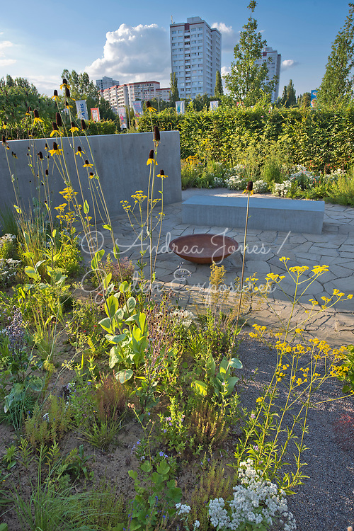 Border in foreground including Rudbeckia maxima (great coneflower), Patrinia scabiosifolia (Golden valerian, Golden lace), Anaphalis triplinervis and Eryngium planum 'Blaukappe' (sea holly 'Blaukappe'). <br /> <br /> Concrete wall and bed represents a house, rusted iron bowl represents furniture whilst the stone paving is the floor of a previous house.<br /> <br /> Carpinus betulus (hornbeam) hedge with border.<br /> <br /> <br /> IGA Berlin 2017, 'The Garden of Vulcan'<br /> Design: Tom Stuart-Smith Ltd