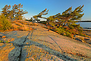 Shoreline of Georgian Bay with white pine trees on precambrian shield rock<br /> French River Provincial Park<br /> Ontario<br /> Canada