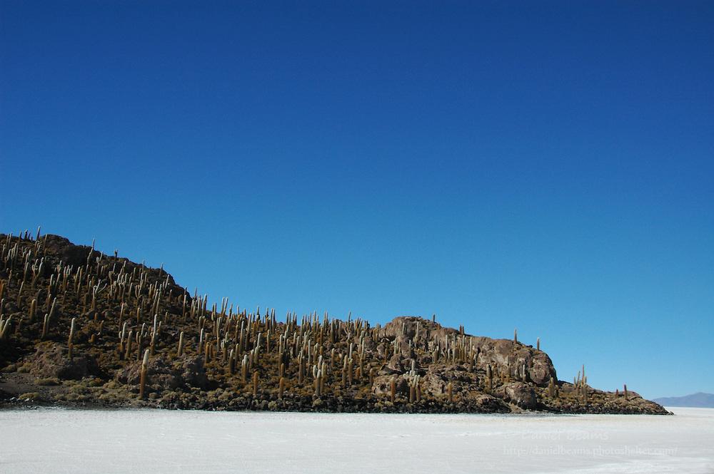 Isla Inca Huasi on the Salar de Uyuni, Potosi, Bolivia