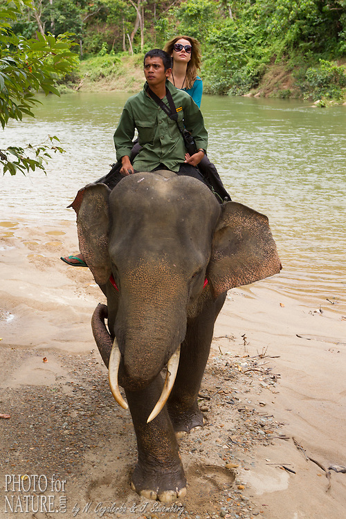 L'éléphant de Sumatra, Elephas maximus sumatranus, endémique des forêts de Sumatra, est une sous-espèce de l'éléphant d'Asie. L'éléphant de Sumatra est en voie d'extinction. Depuis 2011 Il a été placé par l'UICN sur la liste rouge des espèces menacées en tant qu'« espèce en danger critique ». La mission principale du CRU est la médiation des conflits entre éléphants sauvages et les communautés. Projet Fauna and Flora International