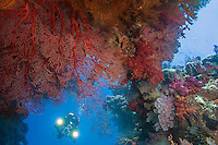 Diving Videographer and Soft Coral Encrusted Swim Through II